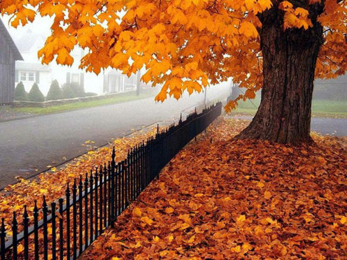 autumn16 ΠΡΟΒΛΕΨΗ ΚΑΙΡΟΥ ΠΕΡΙΒΑΛΛΟΝ ΜΕΡΟΜΗΝΙΑ ΔΗΜΟΣ ΣΤΥΛΙΔΑΣ