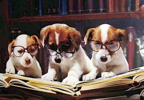 Dogs-Reading